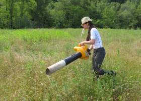 Field sampling of insects using a suction sampler (photo: D. Bevk)