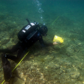 Diver filming habitat types along the transect.