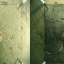 Experiment with anoxia generating chamber placed in situ at 24m depth, left: sediment and macroepifauna at the beginning of the experiment, right: sediment, macroepifauna and macroinfauna after 7 days of chamber closure in anoxic environment