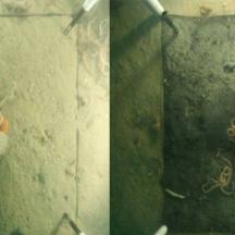 Poskus z bentoško komoro, postavljeno na 24 m globine. Levo: makroepifavna na začetku poskusa, desno: makroepifavna in makroinfavna po sedmih dneh poskusa, ko je bila komora zaprta in so se ustvarili pogoji brez kisika