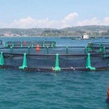 Vpliv ribogojnic na meiofavno - ribogojnica v Piranskem zalivu