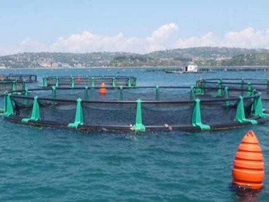 Local fish farm - fish farming impact on bottom meiofauna