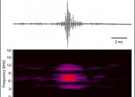 Vibracije azijskega kozlička Anoplophora glabripennis v lesu (oscilogram in sonogram) (slika: M. Zorović)