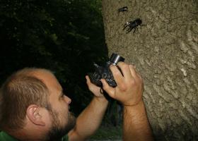 Monitoring hroščev evropskega varstvenega pomena, na sliki najdba rogača (Lucanus cervus). (Foto: Dejan Bordjan)