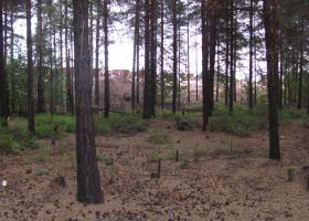 Degradirana gozdna tla zaradi onesnaženosti s težkimi kovinami v okolici talilca v Harjavalti na zahodu Finske. (Foto: Al Vrezec)