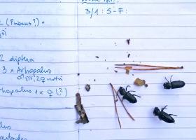 Terenski zapiski ob pregledovanju ulova v feromonskih pasteh (foto: M. Zorović)