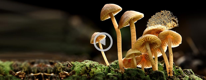 LIFE NATURAVIVA: Biodiversity – Art of Life