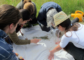 Sorting of collected insects in the field (photo: D. Bevk)