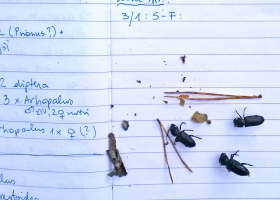 Fieldnotes on checking the catch in pheromone traps (photo: M. Zorović)