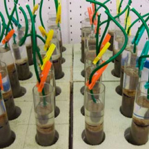 Microcosm laboratory experiments (sediment cores) with meiofauna