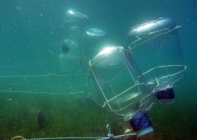Eksperiment degradacije meduz izveden v sklopu projekta PERSEUS (foto: T. Makovec)