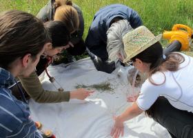 Prebiranje nabranih žuželk na terenu (photo: D. Bevk)