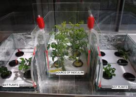 Poskus širjenje virusov z vodo. (Foto Nataša Mehle)
